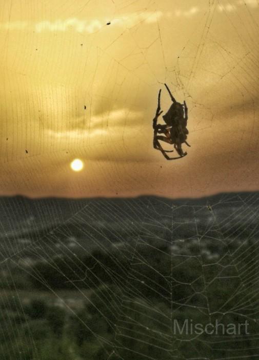 Sunset-spider