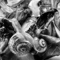 Organic-snails