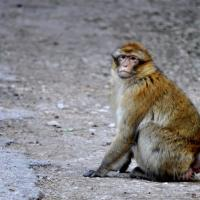photography-animals-monkey