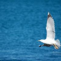 photography-animals-seagull