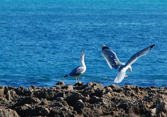 photography-animals-birds