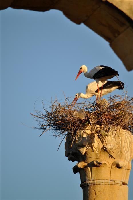 photography-animals-cranes