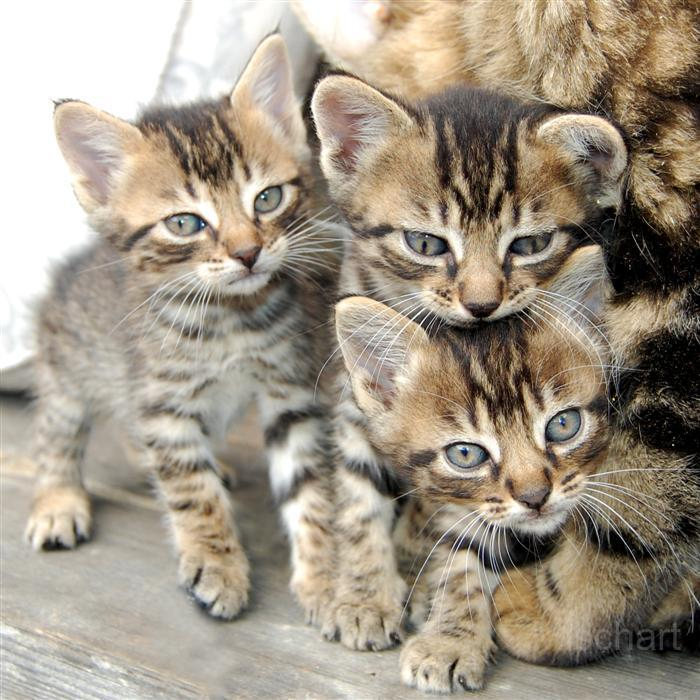 photography-animals-kittens2