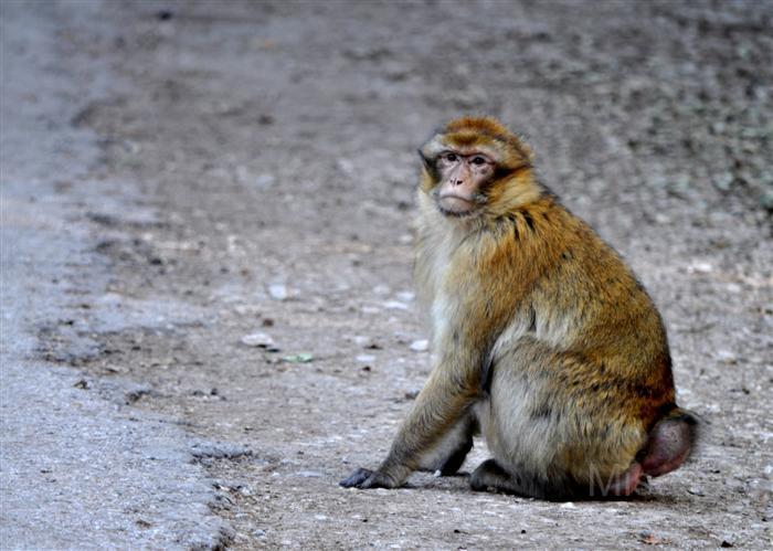 photography-animals-monkey