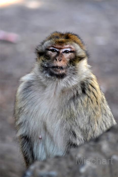 photography-animals-monkey2