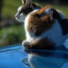 photography-animals-cat2