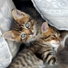 photography-animals-kittens