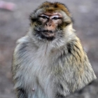 photography-animals-monkey2