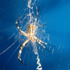 photography-animals-spider