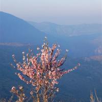 fotografia-naturaleza-almendro