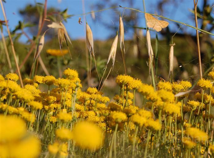 fotografia-paisajes-naturaleza-manzanilla