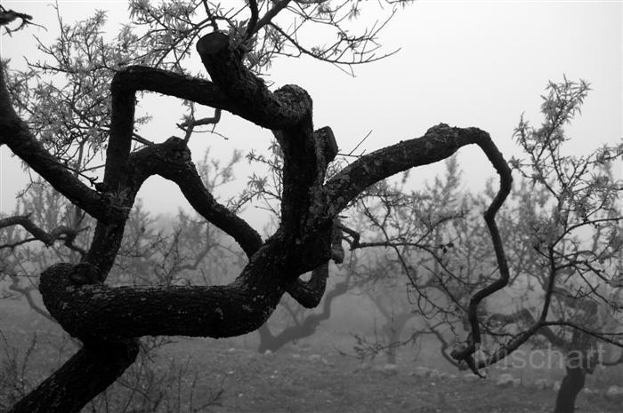 atmospheric-photography-mist-tree