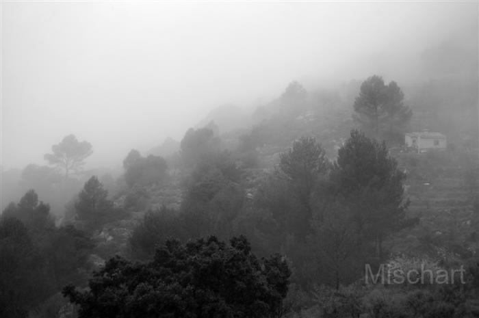 atmospheric-photography-mist