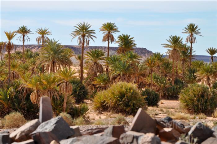 fotografia-marruecos-palmeras