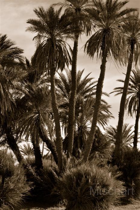 fotografia-marruecos-palms