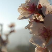 fotografia-paisajes-naturaleza-almendro