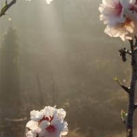 fotografia-paisajes-naturaleza-flores