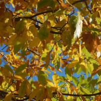 photography-flowers-autumn