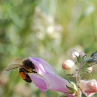 photography-flowers-bee