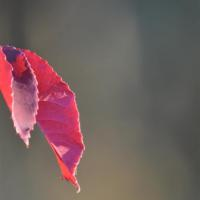 photography-flowers-leaves
