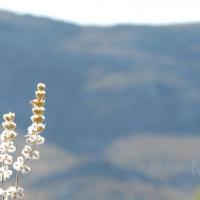 photography-flowers-summer