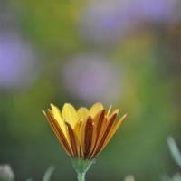 photography-flowers-yellow