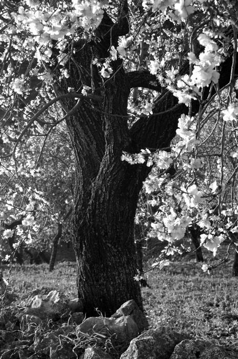 fotografia-naturaleza-blossoms