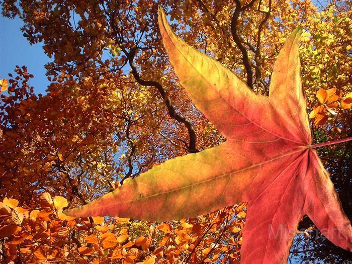 photography-flowers-leaves-orange
