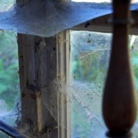 mischart-photography-cobwebs