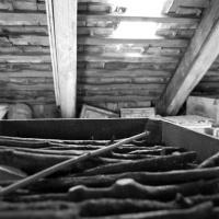 mischart-photography-wood