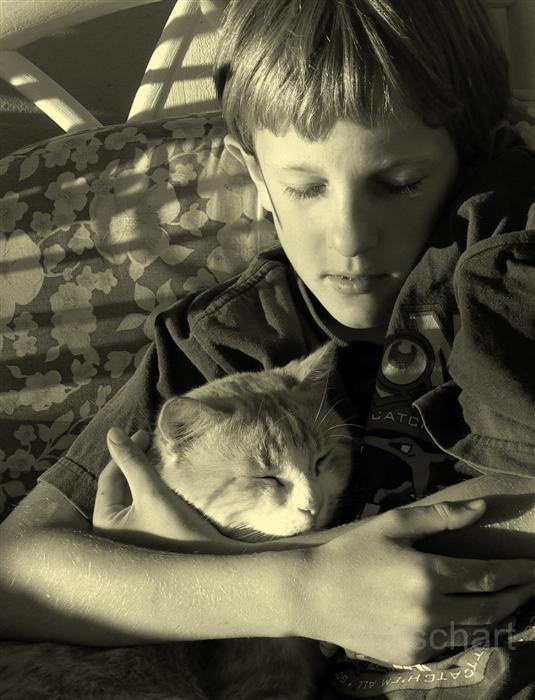 portrait-photography-cat