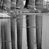 mischart-photography-palms