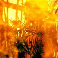 photography-pond-reflection