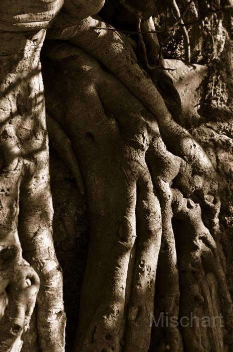 photography-shadows-roots