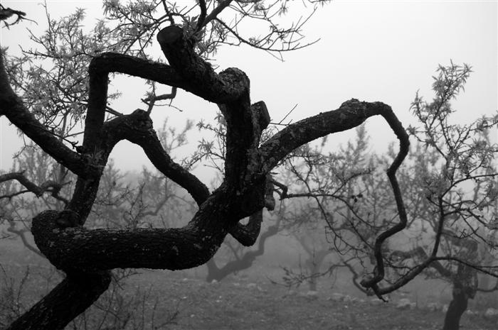 atmospheric-photography-mist-tree