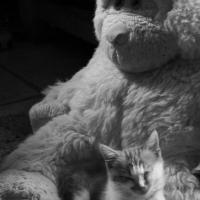 photography-art-fluffy